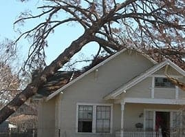Fallen Tree Damage Public Adjusters